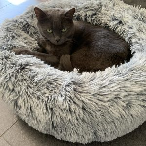Monte & Co | Luxury Calming Cuddler Cat Bed by Snooza Australia | Lucy in Shimmering Silver Fox