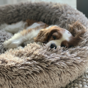 Monte & Co | Luxury Calming Cuddler Pet Cat Dog Bed by Snooza Australia | Monte in Shimmering Mink