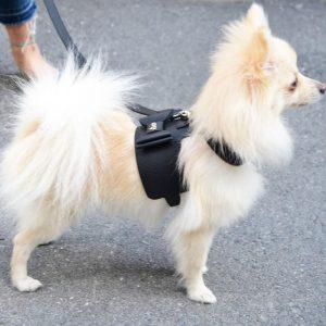 Moshiqa Black Bijou Leather Dog Cat Harness