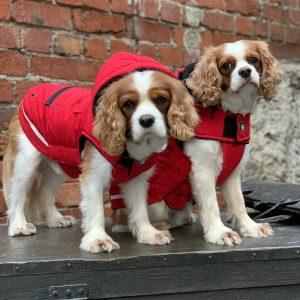 Huskimo Mt Buller Dog Coat