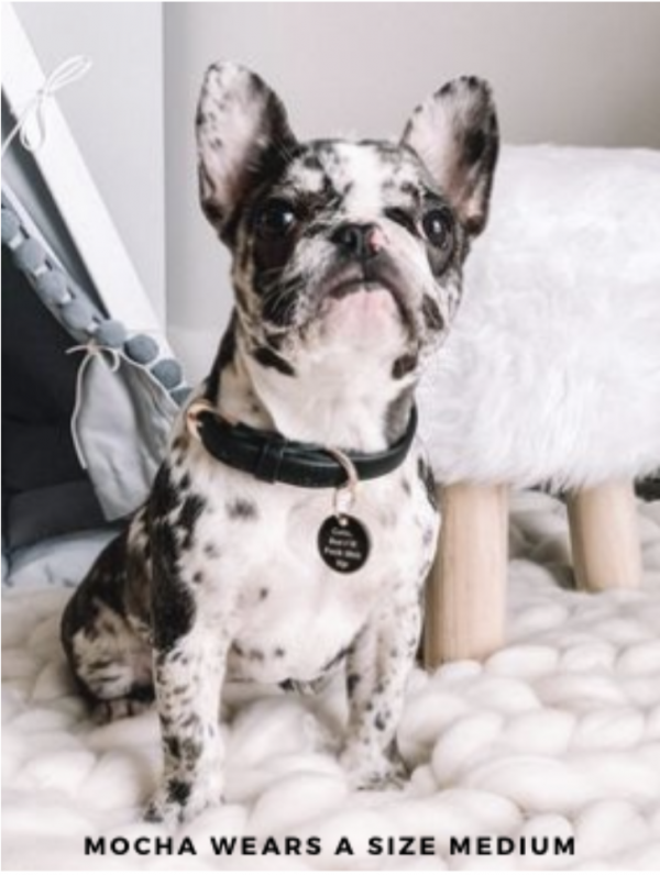 Monte & Co | Designer dog collar in black by St Argo Melbourne