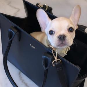 Monte & Co   Lola Black Pet Travel Bag Carrier by St Argo
