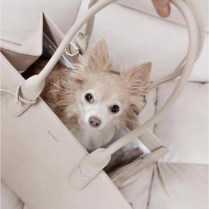 Monte & Co | The LOLA Beige Cream Travel Cat Dog Carrier Hand Bag by St Argo Melbourne