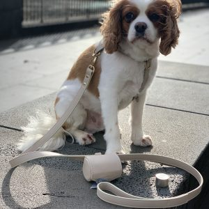 Monte & Co | Designer Dog Cat Harness Dog Walking Set by St Argo | Taupe