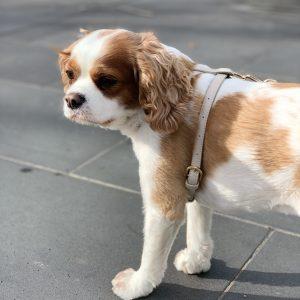 Monte & Co | Designer Dog Cat Harness by St Argo | Beige Taupe