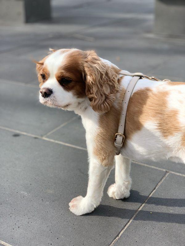 Monte & Co   Designer Dog Cat Harness by St Argo   Beige Taupe