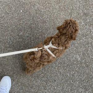Monte & Co   Designer Dog Harness by St Argo   Beige Taupe