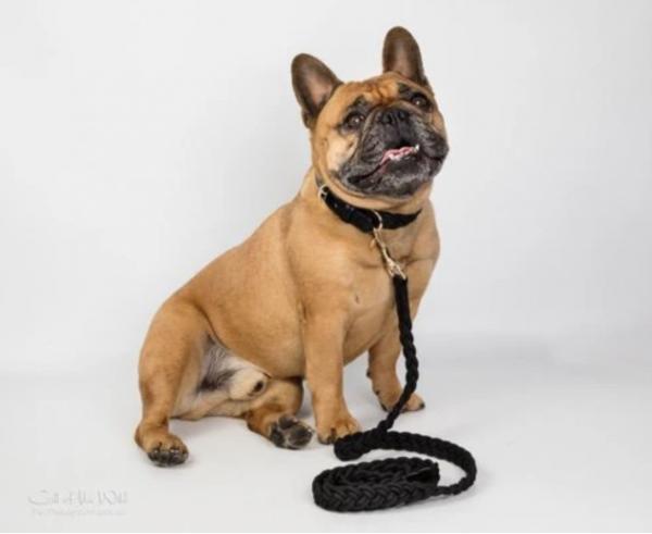 Monte & Co   Black plaited pet dog cat lead by HGP Luxury Pet Accessories