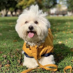Monte & Co   Designer Pet Cat Dog Lead by St Argo Melbourne   Mustard Yellow