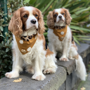 Monte & Co | Designer Scarf Dog Bandana by HGP Luxury Pet Accessories | Tarzan _ Burnt Orange
