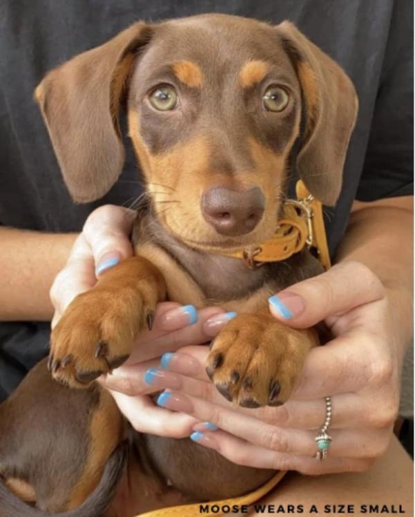Monte & Co | Designer dog collar in Mustard Yellow Gold by St Argo Melbourne