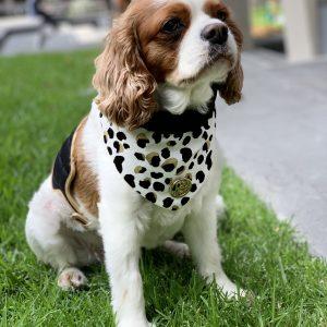 Monte & Co   Luxury cat dog bandana scarf by HGP Luxury Pet Accessories   Kenya print