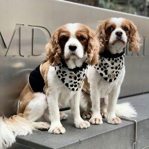 Monte & Co | Luxury cat dog bandana scarf by HGP Luxury Pet Accessories | The Kenya