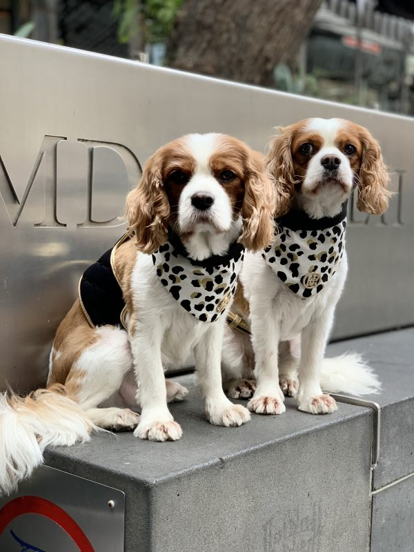 Monte & Co   Luxury cat dog bandana scarf by HGP Luxury Pet Accessories   The Kenya