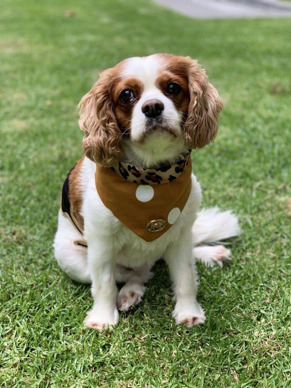 Monte & Co | Luxury dog scarf bandana by HGP Luxury Pet Accessories | Tarzan print | Orange Mustard