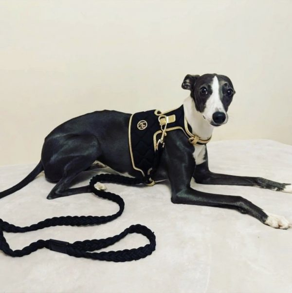 Monte & Co | Coco Midnight Black & Gold Dog Harness by HGP Luxury Pet Accessories
