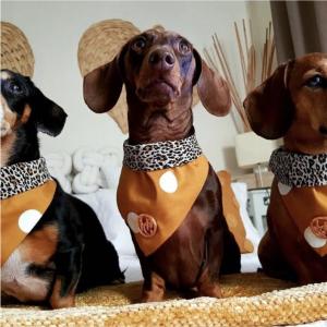 Monte & Co | Mustard Dog Cat Bandana Scarf by HGP Luxury Pet Accessories