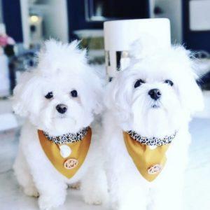 Monte & Co | Tarzan Mustard Dog Cat Bandana by HGP Luxury Pet Accessories