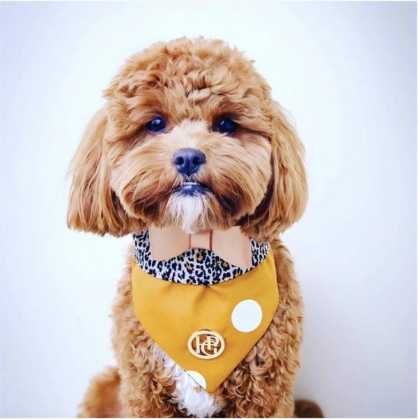 Monte & Co | Tarzan Mustard Dog Bandana Scarf by HGP Luxury Pet Accessories