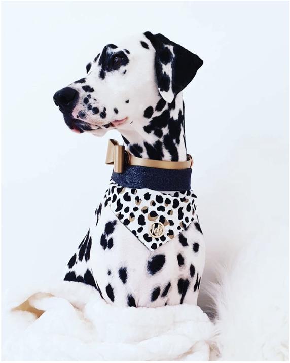 Monte & Co   The Kenya Scarf Bandana by HGP Luxury Pet Accessories