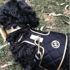 Monte & Co | The Coco Midnight Black & Gold Dog Harness by HGP Luxury Pet Accessories