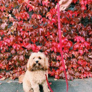 Monte & Co   Designer Red Dog Leash Lead in vegan leather   by St Argo Melbourne
