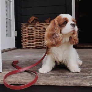 Monte & Co   Designer Red Vegan Leather Dog Leash Lead by St Argo Melbourne
