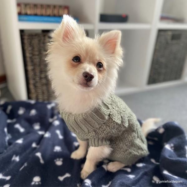 Monte & Co | Luxury Chunky Knit Dog Sweater in Eucalyptus Green by Huskimo Australia