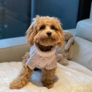 Monte & Co | Luxury Merino Wool Chunky Knit Sweater by Sebastian Says | Soft Pink