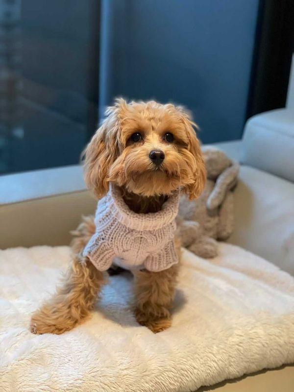 Monte & Co   Luxury Merino Wool Chunky Knit Sweater by Sebastian Says   Soft Pink