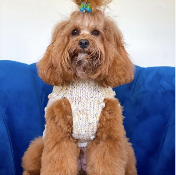 Monte & Co | Merino wool bobble chunky knit dog jumper sweater in Speckle by Sebastian Says | @kevin_the_toy_cavoodle