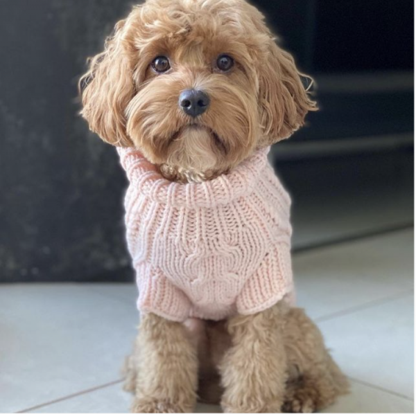 Monte & Co   Merino wool cable knit dog jumper sweater in Pale Pink by Sebastian Says