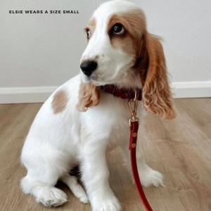 Monte & Co | Designer Dog Cat Collar Walk Set by St Argo | Rich Ruby Red