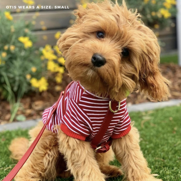 Monte & Co   Designer Dog Cat Harness Walking Set Accessories by St Argo   Rich Ruby Red