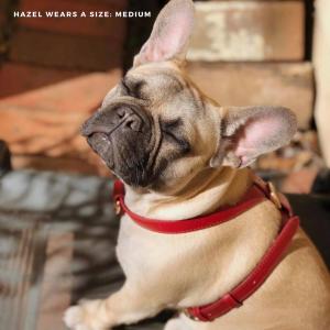 Monte & Co | Designer Dog Harness by St Argo Melbourne | Ruby Red