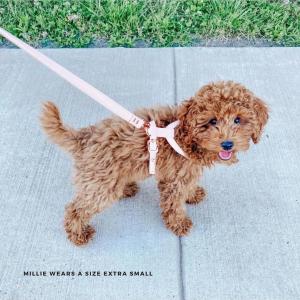 Monte & Co | Designer Dog Harness by St Argo | Pale Pink