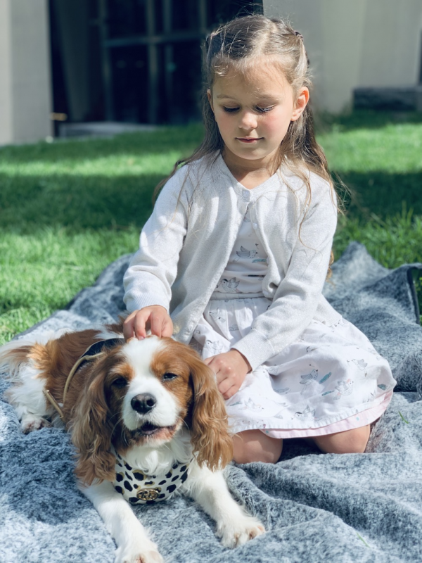 SupaDry Luxe Indoor:Outdoor Travel Picnic Dog Blanket by Snooza Pet Products